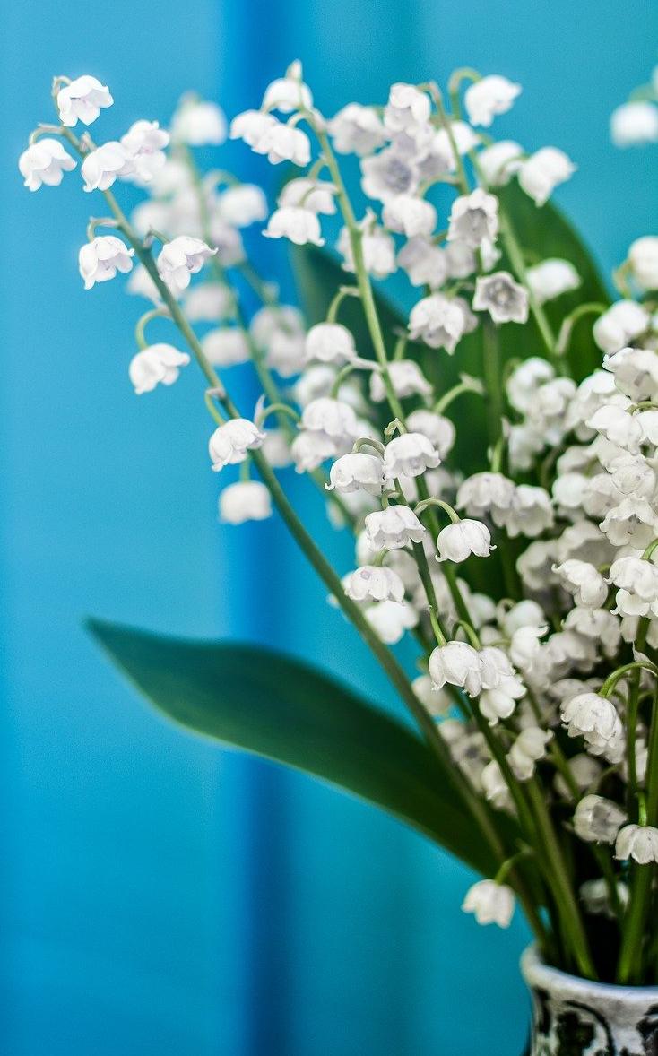 Buquê de muguet, flor que simboliza o 1º de maio na França